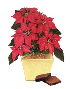Poinsetta and chocolate: poisonous to pets